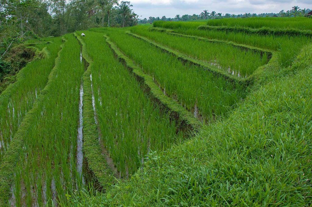 Bali_2012_13_4287hp