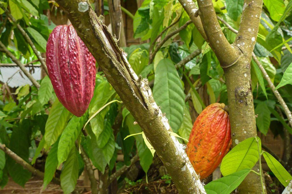 Bali_2012_22_1010405hp