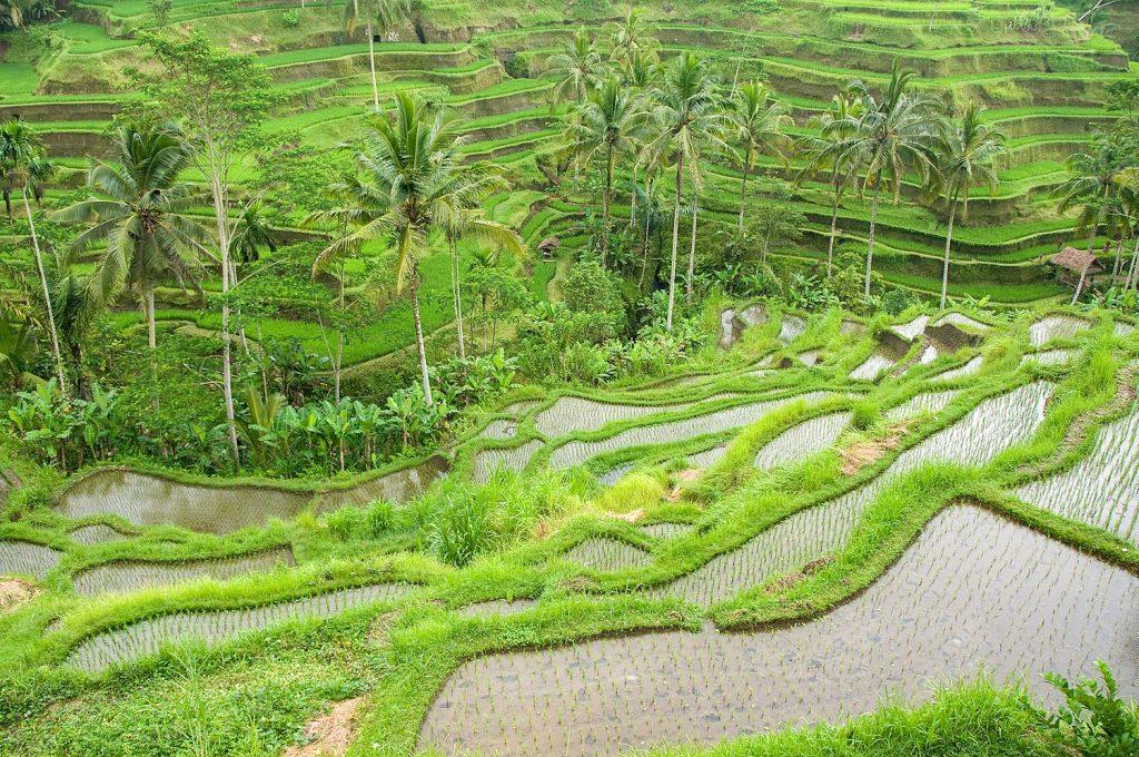 Bali_2012_25_4397hp